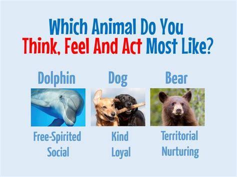 animal    feel  act