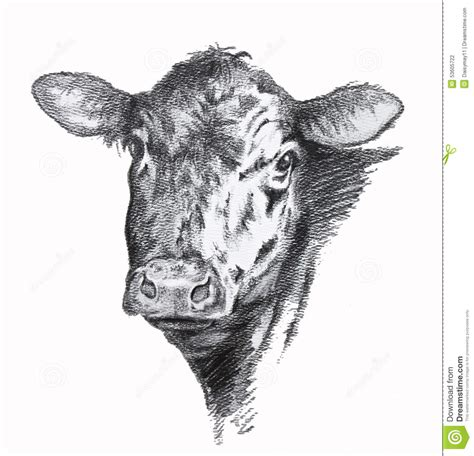imagenes de vacas a lapiz dibujo de l 225 piz de la vaca stock de ilustraci 243 n imagen