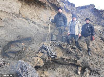 fosil gajah daging penemuan fosil gajah mammoth berusia 30 000 tahun