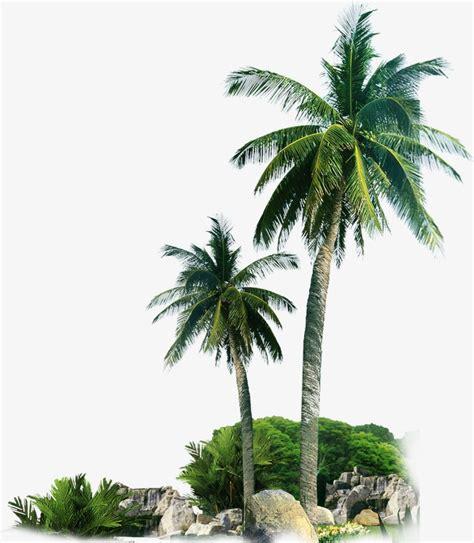 Cute Plant by Beach Palm Tree Sandy Beach Palm Tree Sandy Png And Psd