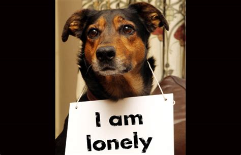 dogs that can be left alone day afternoons can be lonely for pets left alone report