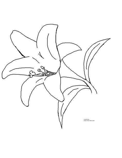 coloring pictures of lily flowers free lily flower coloring pages