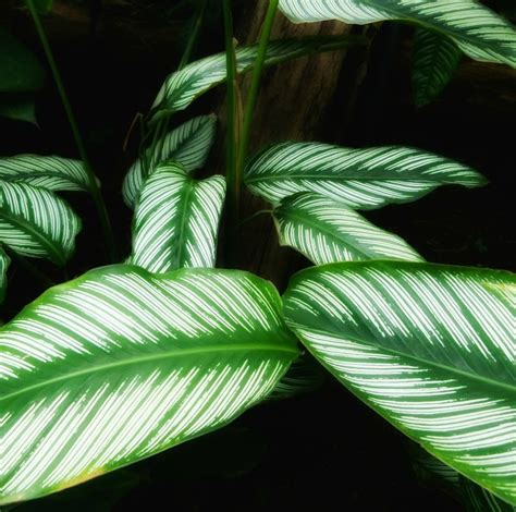 plants that thrive in low light low light indoor plants house plants that thrive in