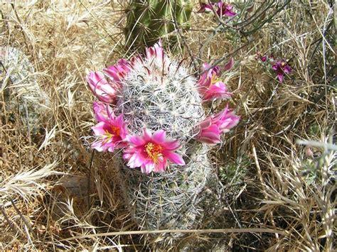 cactus da interno piante grasse da interno piante appartamento piante