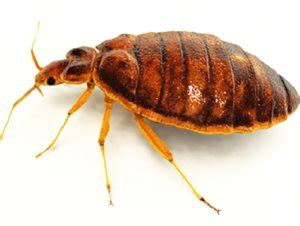 bed bug exterminator detroit bed bug cities ranked a real lousey guide on where to