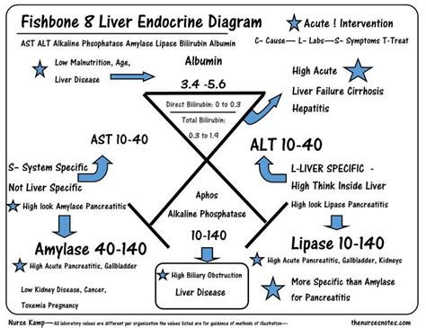 lab results diagram liver function fishbone search work
