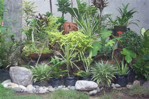 Plants For A Rock Garden Homeofficedecoration Plants For Rock Gardens