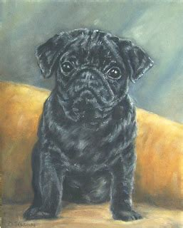 pug rescue of northwest arkansas daily painting projects black pug puppy daily