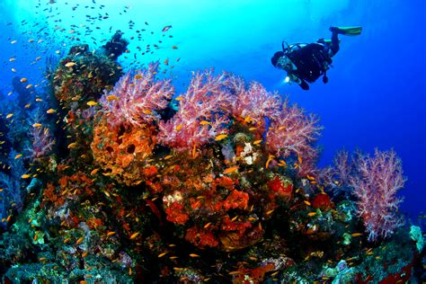 dive in scuba 7 reasons to start scuba diving asap awesome