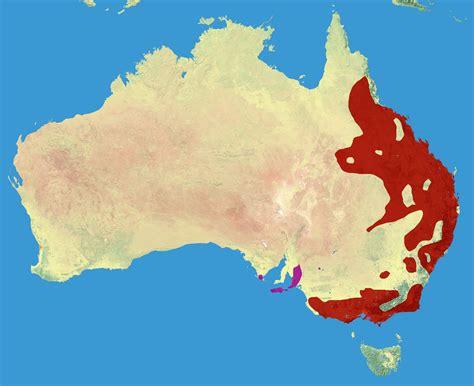 si鑒e habitat file koala range jpg wikimedia commons