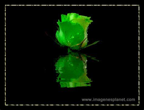 imagenes variadas con movimiento rosa verde animada con movimiento im 225 genes de amor con