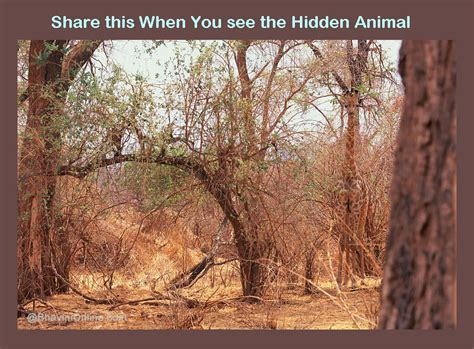 Find With A Picture Picture Riddle Find The Animal Bhavinionline
