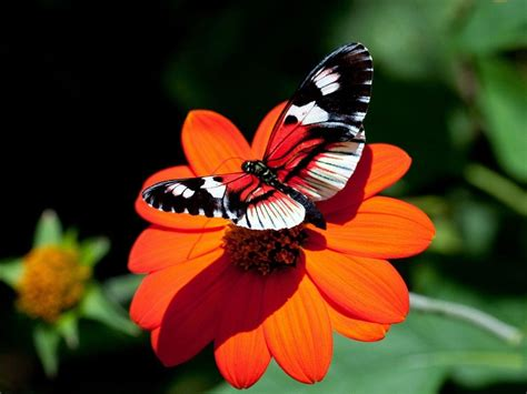 wallpaper flower with butterfly butterfly and flower wallpapers wallpaper cave