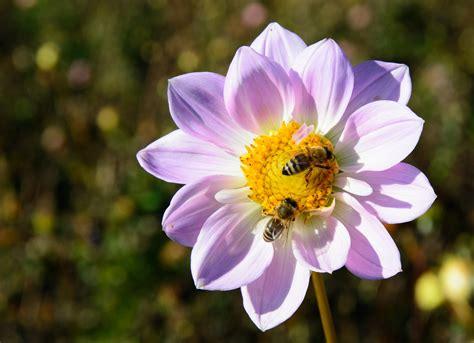 fiori in tavola vita da api un concentrato di fiori in tavola il ponticello