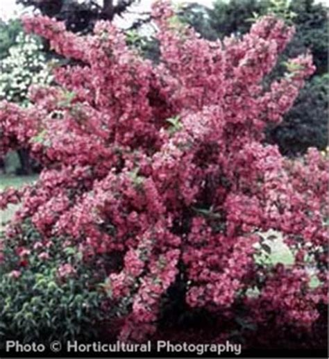 57 best gardening trees images on pinterest garden trees garden plants and nature