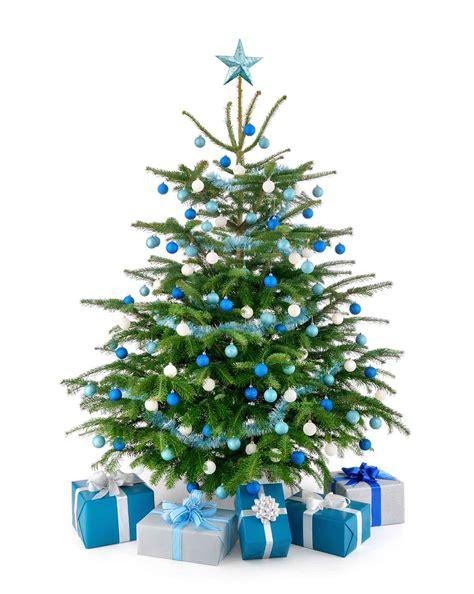 christmas trees steve s industries ltd