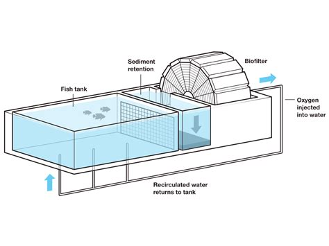catfish hatchery layout fish tank business plan the assignment film review