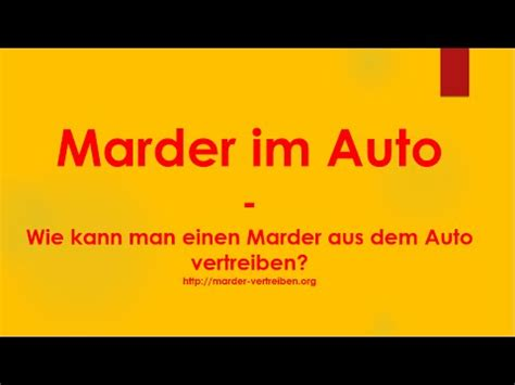 Wie Kann Einen Marder Vertreiben 2242 by Marder Im Auto Wie Kann Ich Einen Marder Aus Dem Auto