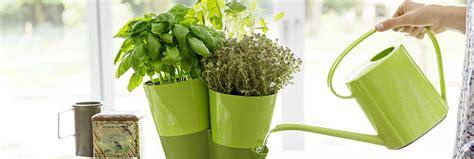 Aromates En Pot herbes aromatiques en pot