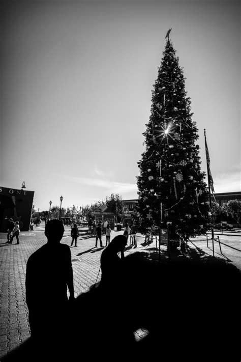 imagenes raras blanco y negro imagen de arbol de navidad foto gratis