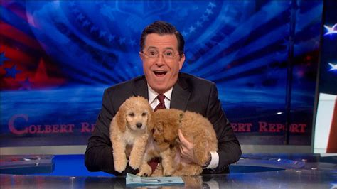 stephen colbert puppies on topic the desk the colbert report clip comedy central