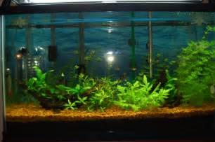 file fresh water aquarium 2013 01 20 7064 jpg wikimedia