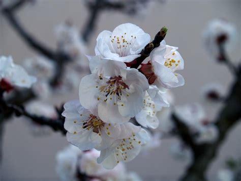 di giorno fiori marzo 2007 luke s corner
