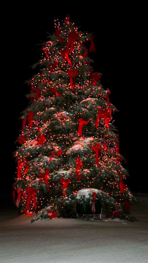 7 Beautiful Tree Themes by 1021 Best Trees Images On