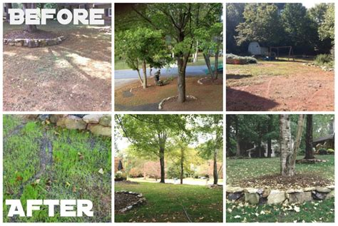 we have a green lawn thanks to trugreen before and after
