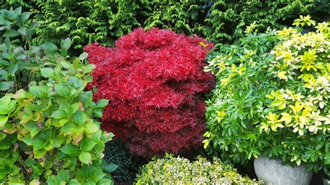 Garten Pflanzen Oktober by Kostenlose Foto Blume Herbst Botanik Garten Strauch