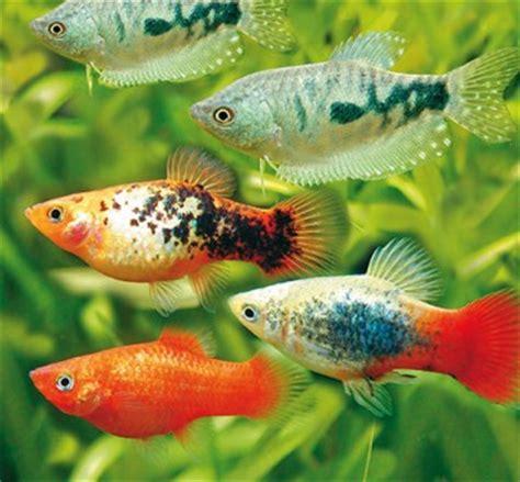 aquarium fische  bei hornbach kaufen