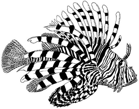 Warm Sea Creature Lionfish Coloring Pages Batch Coloring Lionfish Coloring Page