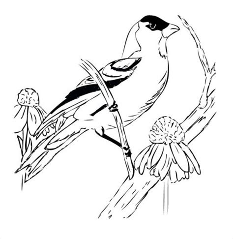 how to draw a goldfinch goldfinch drawing