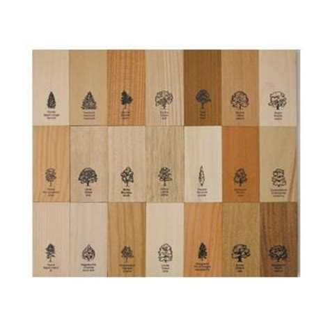 different types of wood for woodworking collection of blocks all different wood types with label
