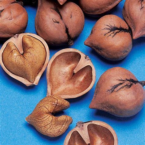 What Fruit Trees Grow In Texas - heartnut walnut trees stark bro s