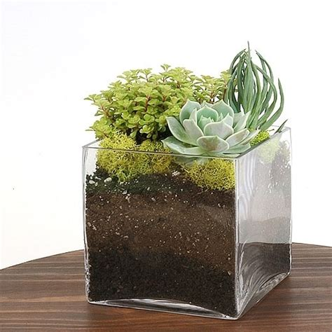 Terrarium Vases by Square Glass Terrarium Vase