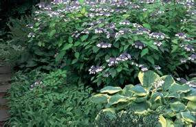 best flowers for shade gardens shade flowers foliage
