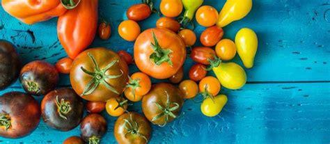 Arrosage Des Tomates Dans Le Sud by Comment Cultiver Un Petit Potager Sur Balcon