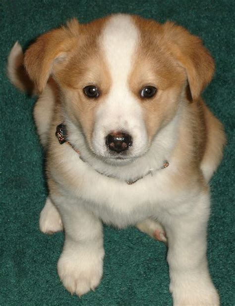 cutest mixed breed puppies image gallery mixed breed puppies