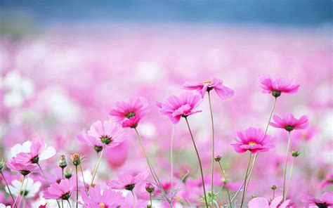wallpaper for laptop of flowers wallpapers wildflowers wallpapers