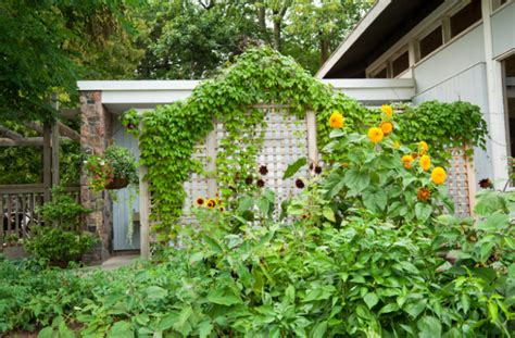 backyard vines 10 best outdoor privacy screen ideas for your backyard