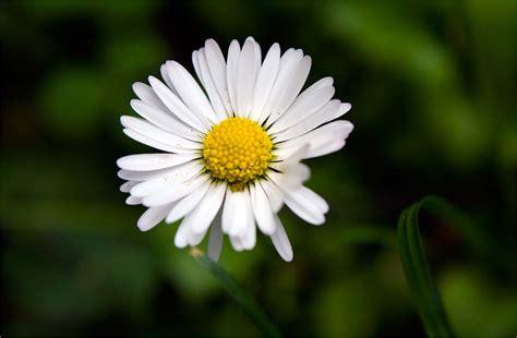 foto hd fiori le fotografie immagini wallpaper di fiori pi 249