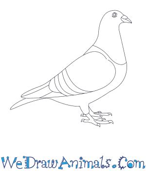 doodle how to make pigeon how to draw a pigeon