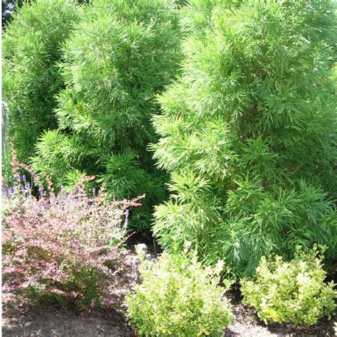 a guide to northeastern gardening deer resistant plants in the landscape