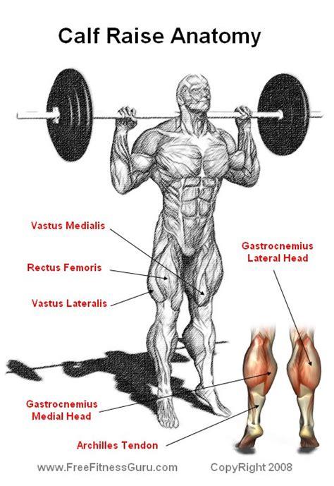 calf diagram calf raise anatomy corpo e defini 231 227 o fitness