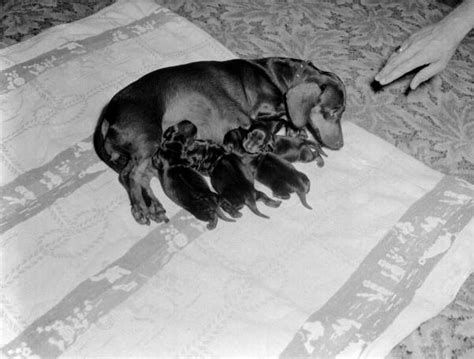puppies in jacksonville fl florida memory with puppies jacksonville florida