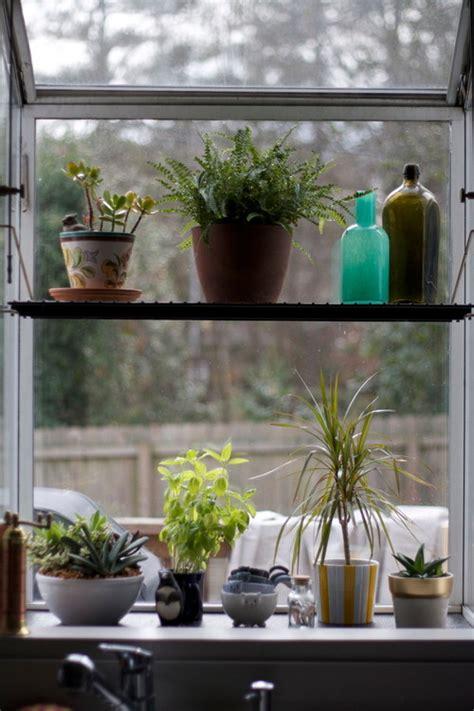 house plants   handle  hot south facing garden