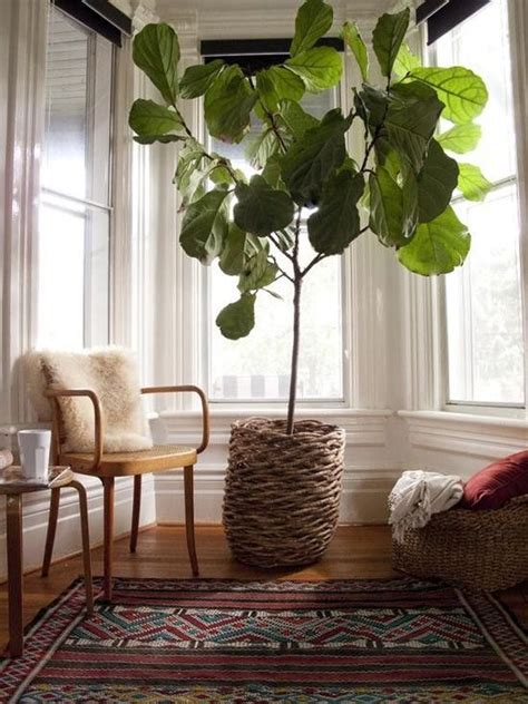 stylish ways   indoor plants   homes decor