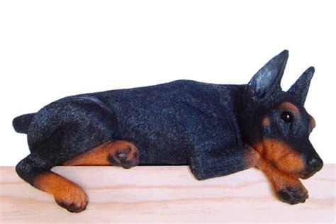 dcor dobermann oreilles coupes noir et