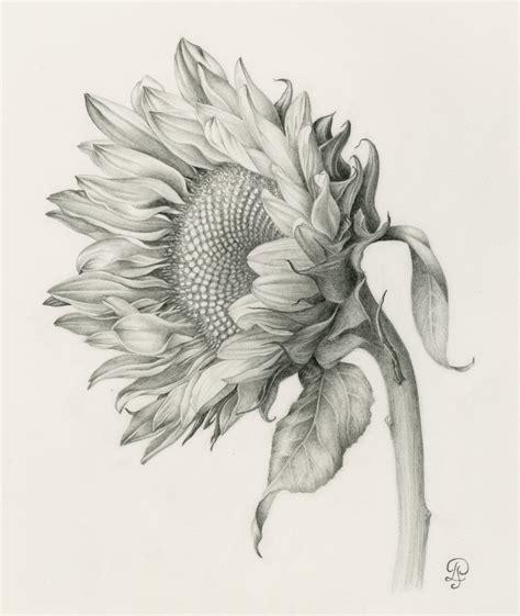 libro botanical drawing using graphite distance learning opportunities in arlington va denver botanic gardens